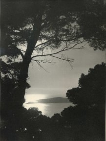 Unknown photographer, Sunset between the trees